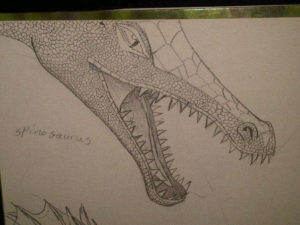 spinosaurus sketch by anaithehedgehog1