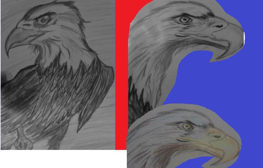 eagles by artfreakjess1