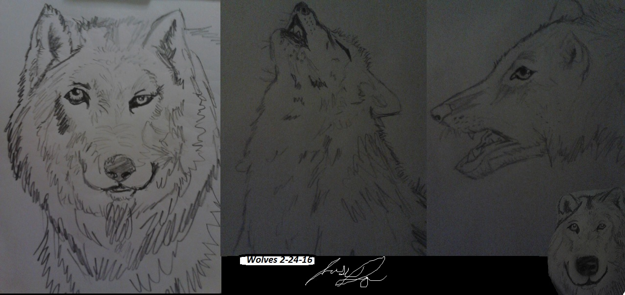 wolves by artfreakjess1