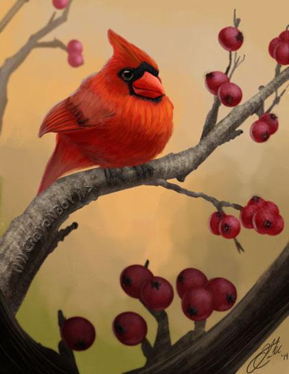 Cardinal by CRaYoNBoY