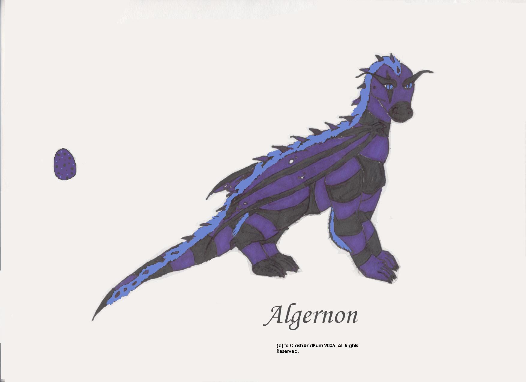 Algernon by CrashAndBurn