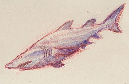 sand shark by chibibreeder