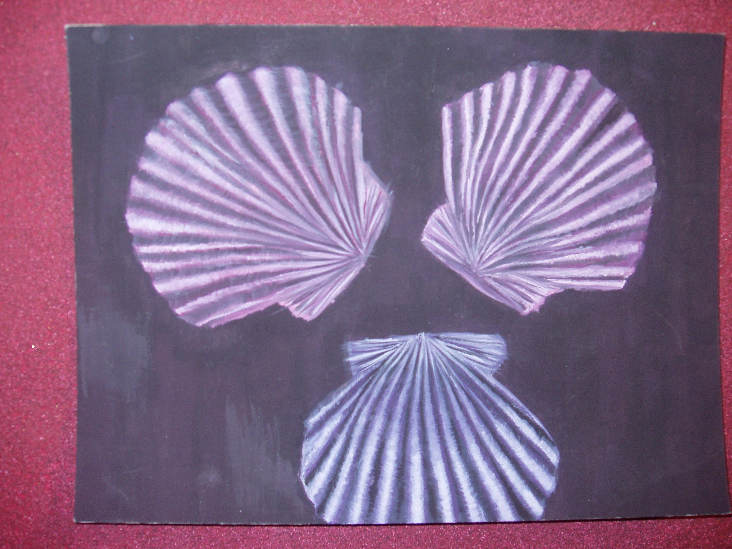 Sea shell still life by DarknessEternity1027