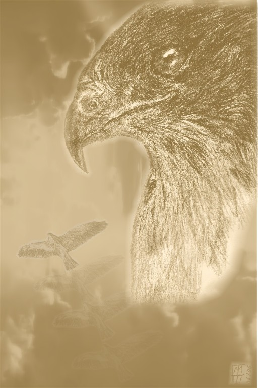 The spirit of the hawk by Eleasar