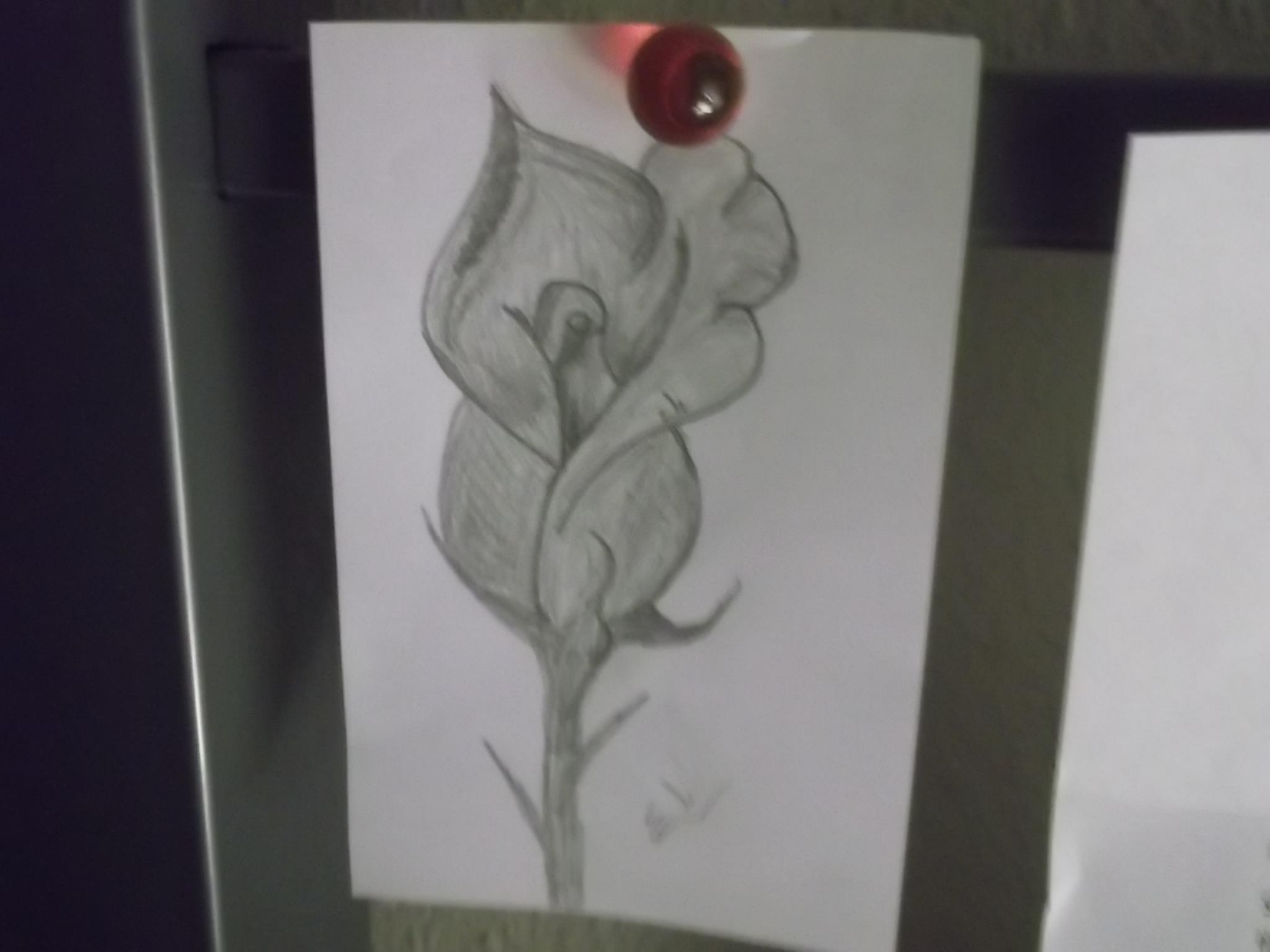 Rose by Eli333