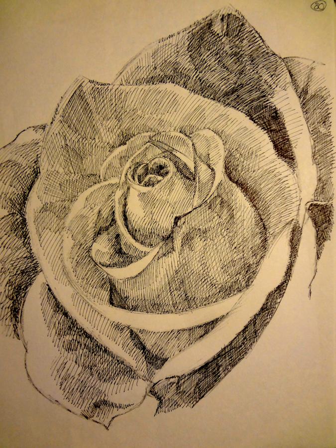 Rose by Firiel