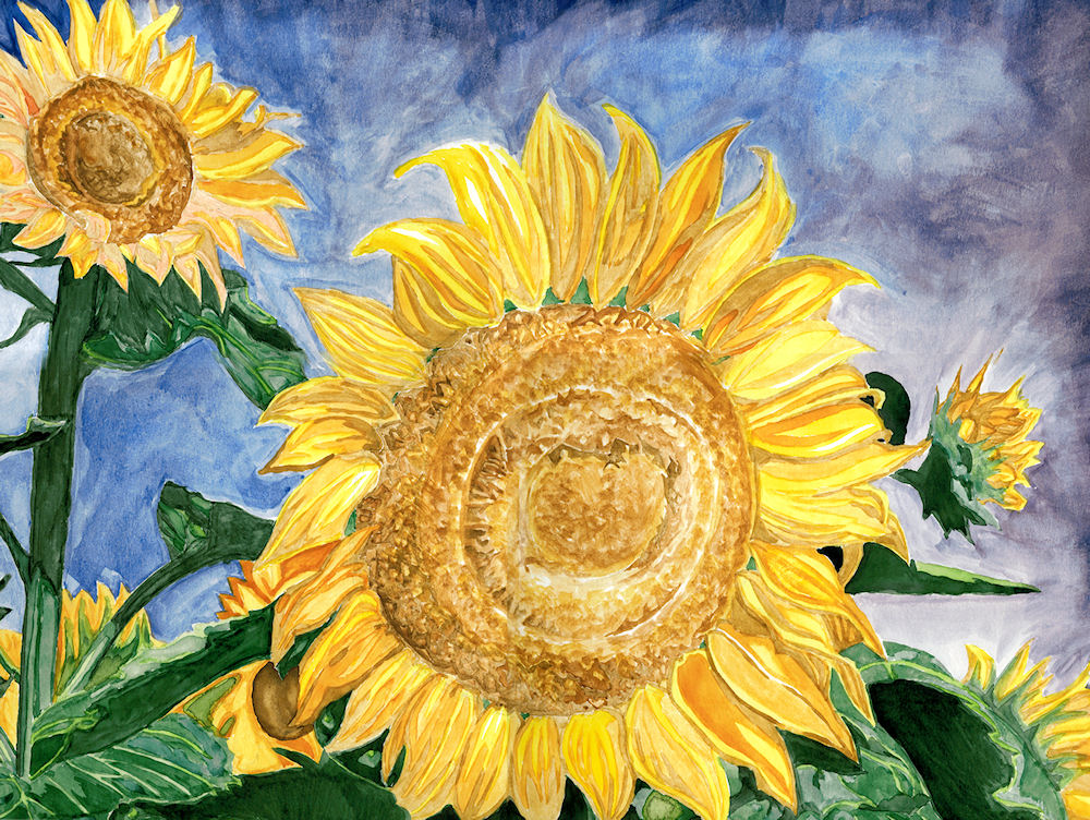 Sunflowers by Firiel
