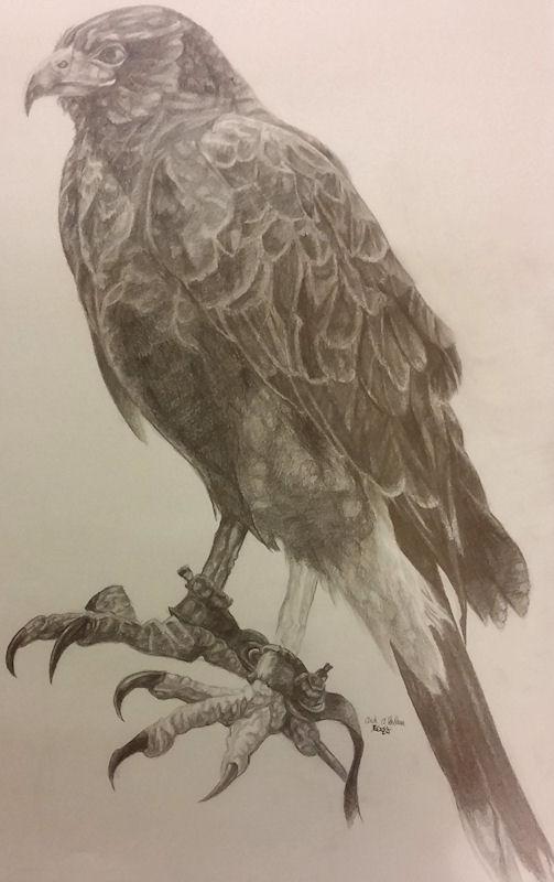 Hunter's Hawk by Firiel