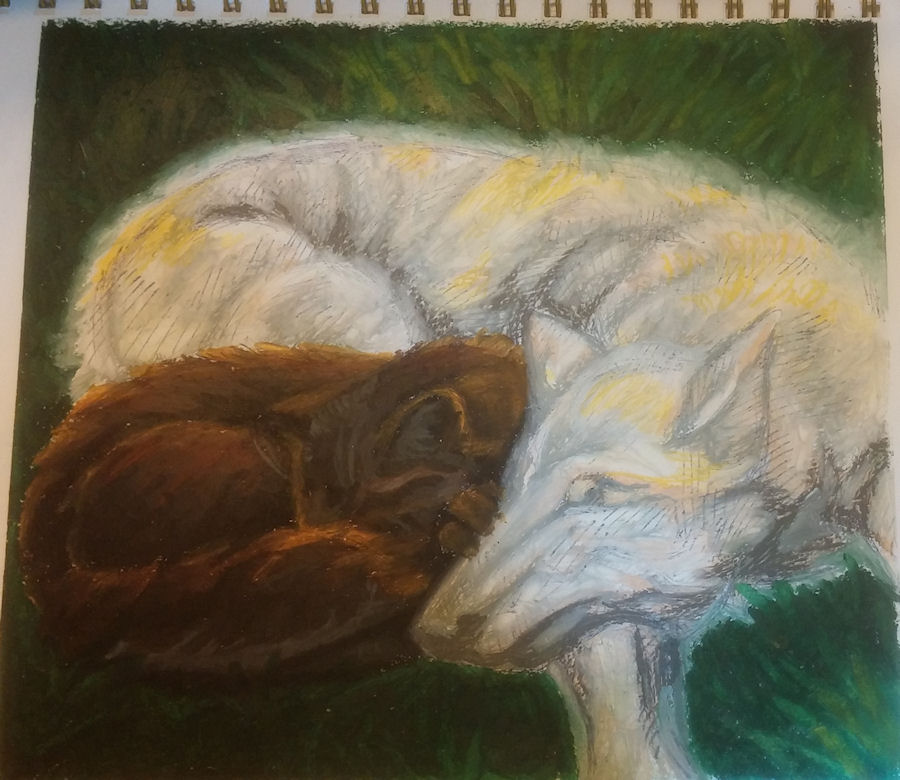 wolf and cat for wishsayer by Firiel