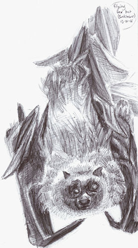 inktober7 - flying fox by Firiel