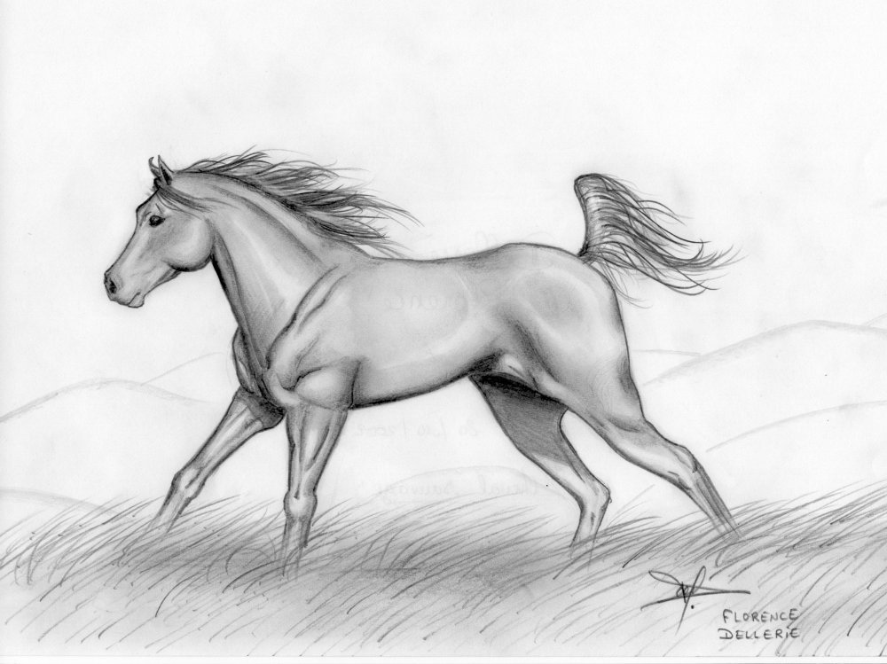 Cheval sauvage by Florence