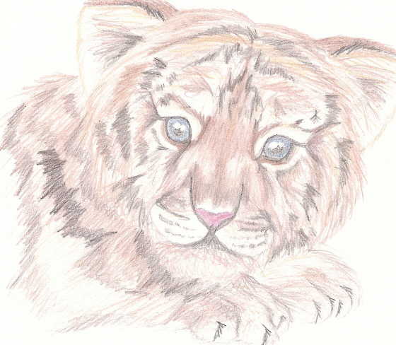 Baby Tiger by Fluffy_fan4774