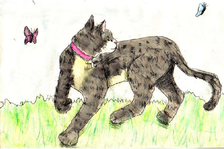 My cat: simba by Fluffybunny