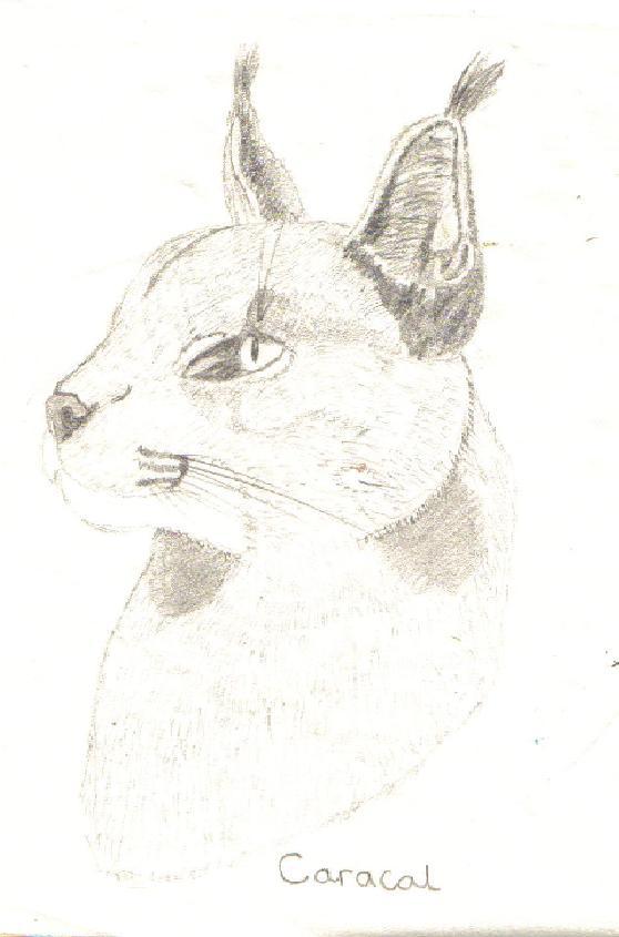 A caracal by Fluffybunny