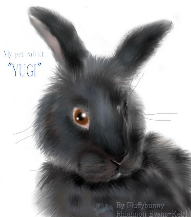 My little yugi bunny by Fluffybunny