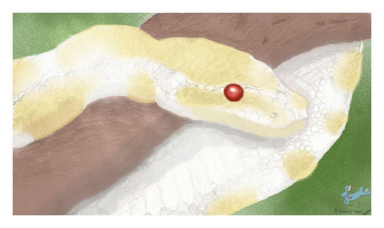 a melanistic ball python by Fluffybunny