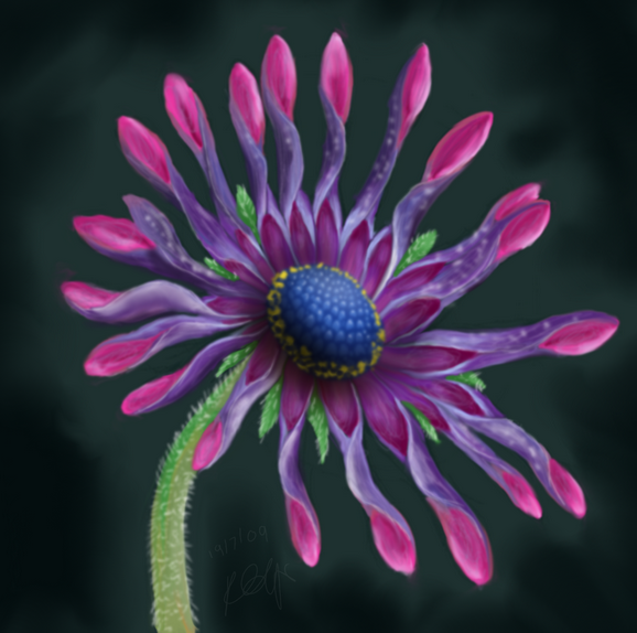 African Daisy by Fluffybunny
