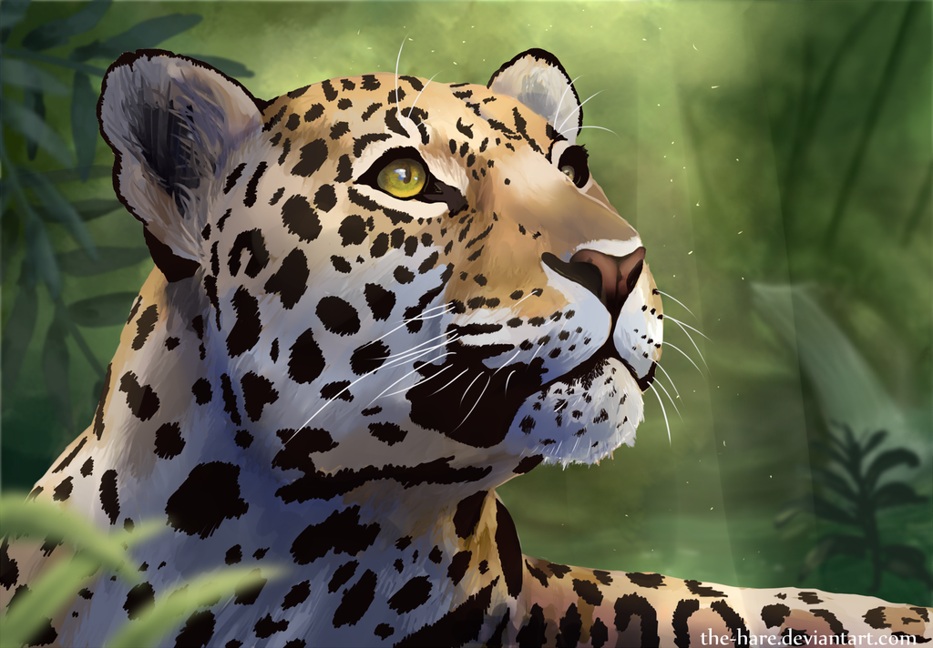 Jaguar by Fluffybunny