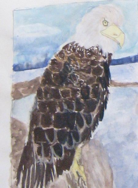 Bald Eagle in water color by Flurpie