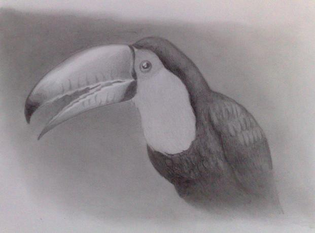 Toucan Sketch By Frankyboy - Fanart Central