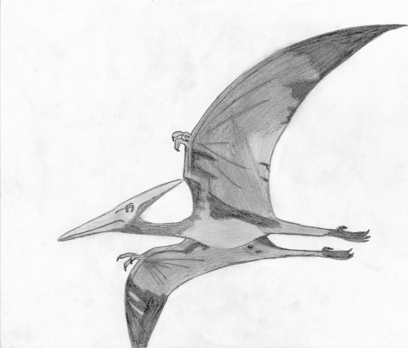 Pteranodon by FreddyJasonV