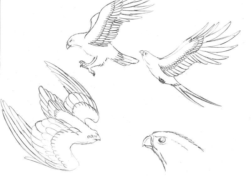Hawk Doodles by FreddyJasonV