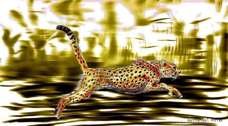 A cheetah running at full