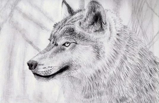 A Wolf by Gameglitch