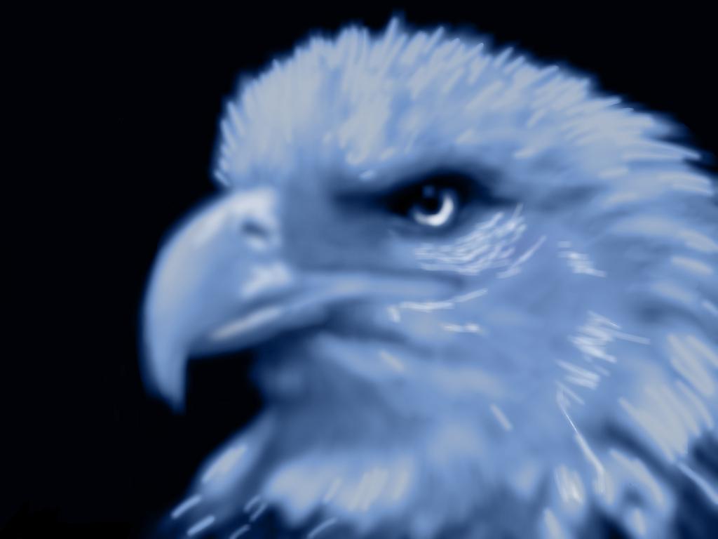 bald eagle by HawkTheShadowhunter