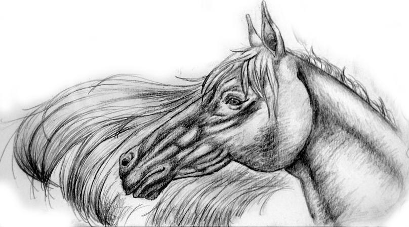 Horse 1 by Hoodie