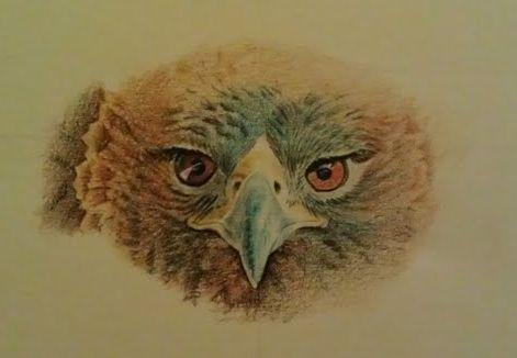 Golden eagle 2 by johnnydraws