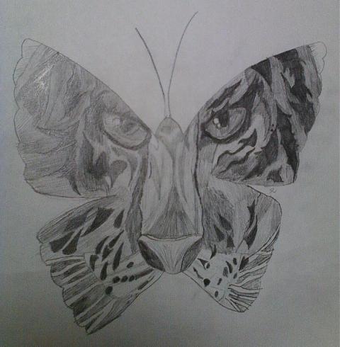 Tiger Butterfly by KyiNekoYasha