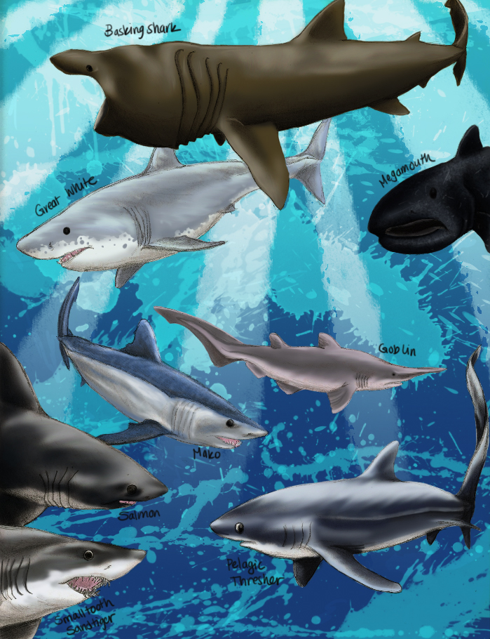Sharkee Extravaganza: Colored Lamnids by killerrabbit05