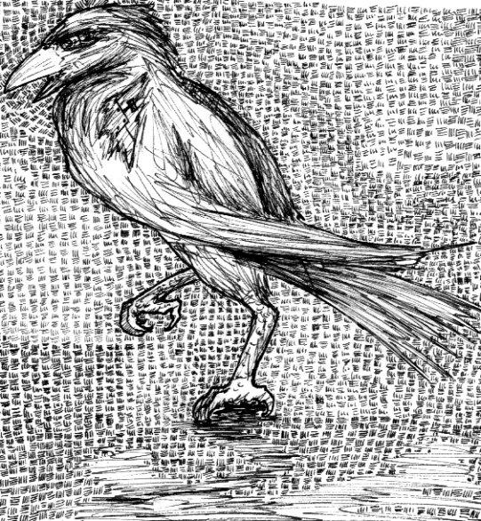 Crow by klatch_of_Tyria