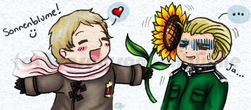 Sonnenblume by krasniysonnenblume