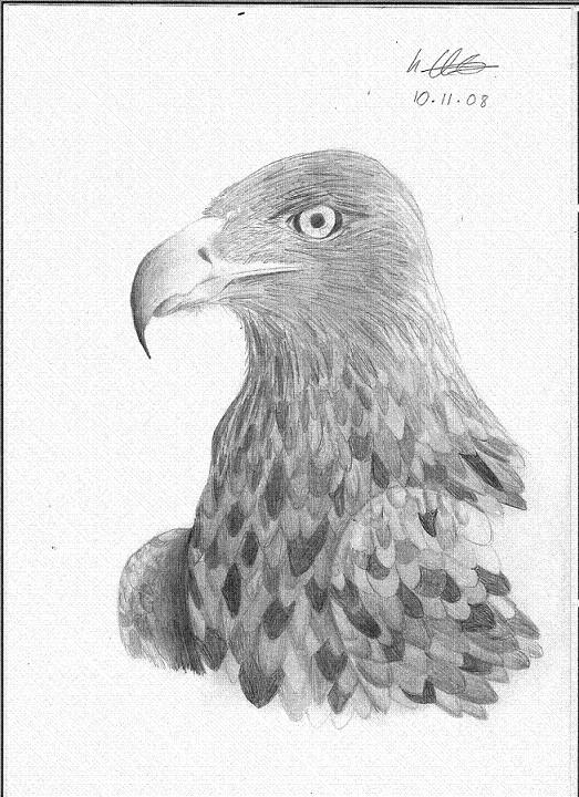 Eagle by Ladysnow