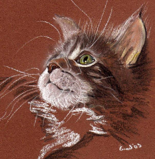 cat sketch by lady_nitemare