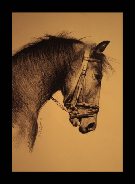 Horse by lisabailarina