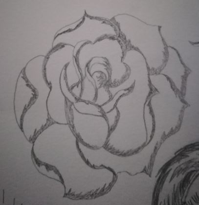 Pencil sketch of a rose by Marilyn