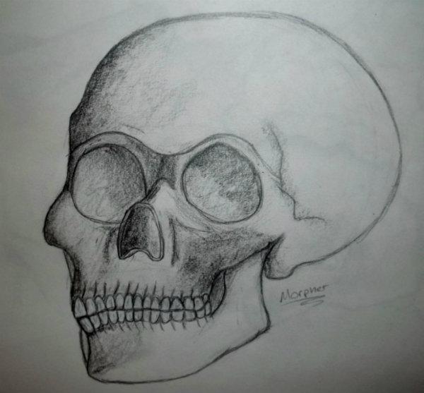 Skull by Morpher