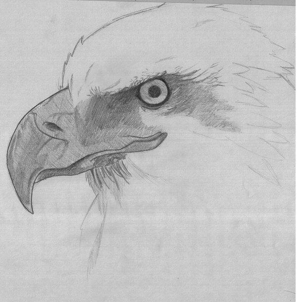 Bald Eagle by m4r14m4yh3m