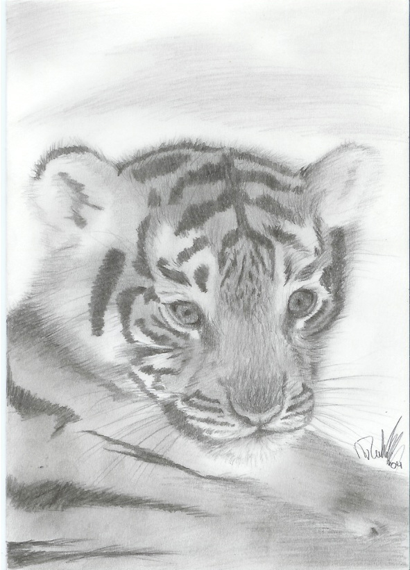 !! Little Tiger !! by nienke