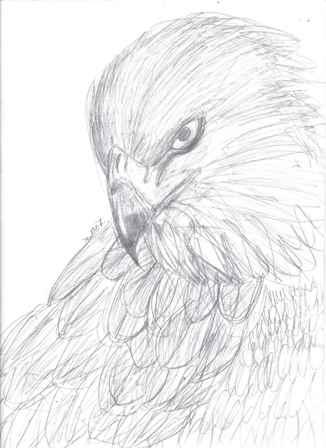 Hawk by Past_Sinns
