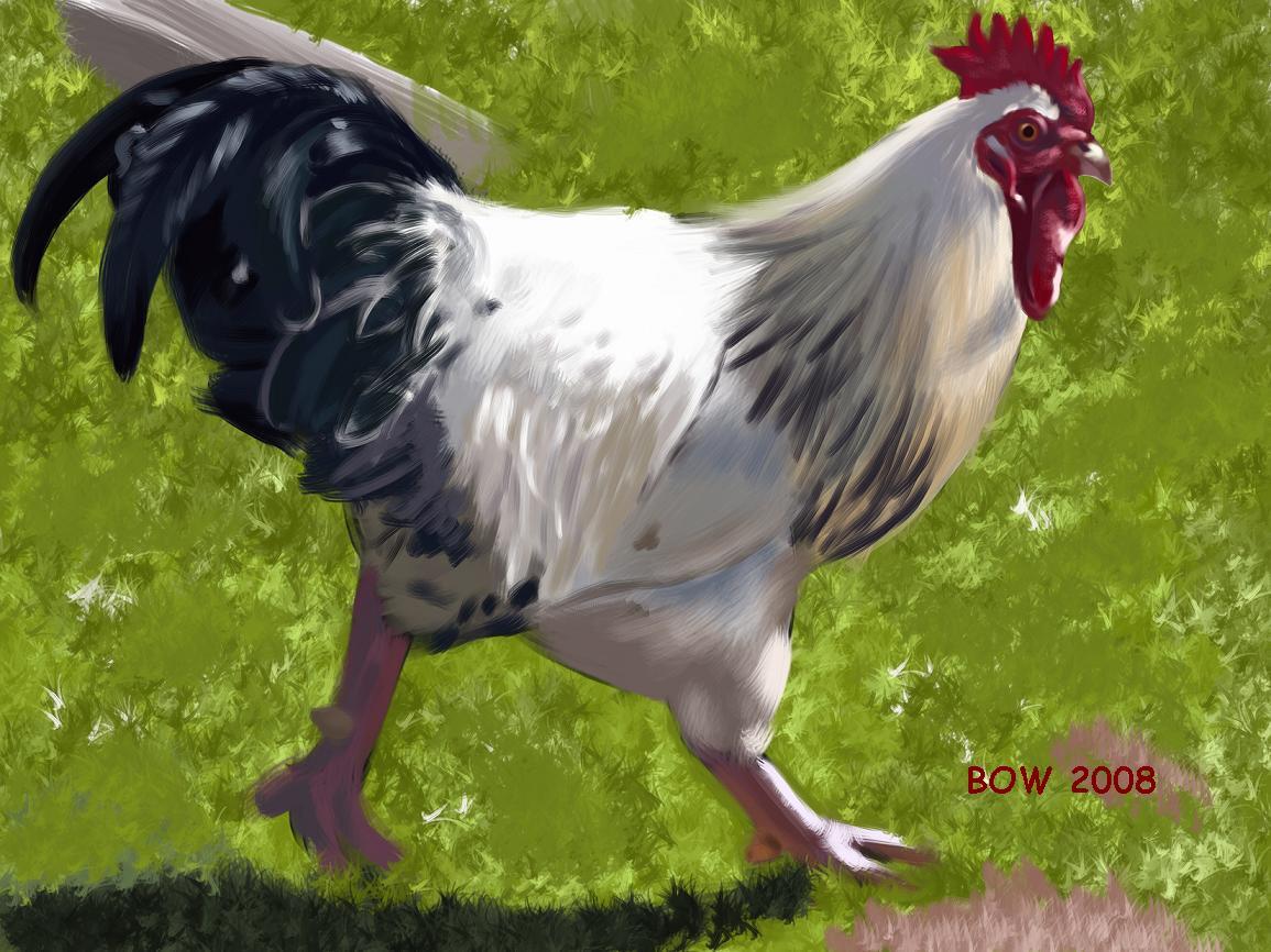 Rooster 1 by pantslesshobo