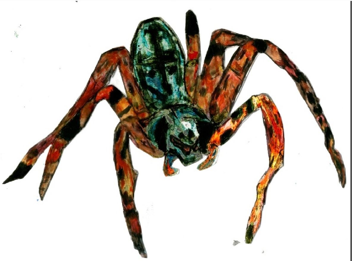 Money Spider Closeup Detail Sketch by RaggleTaggleGypsy