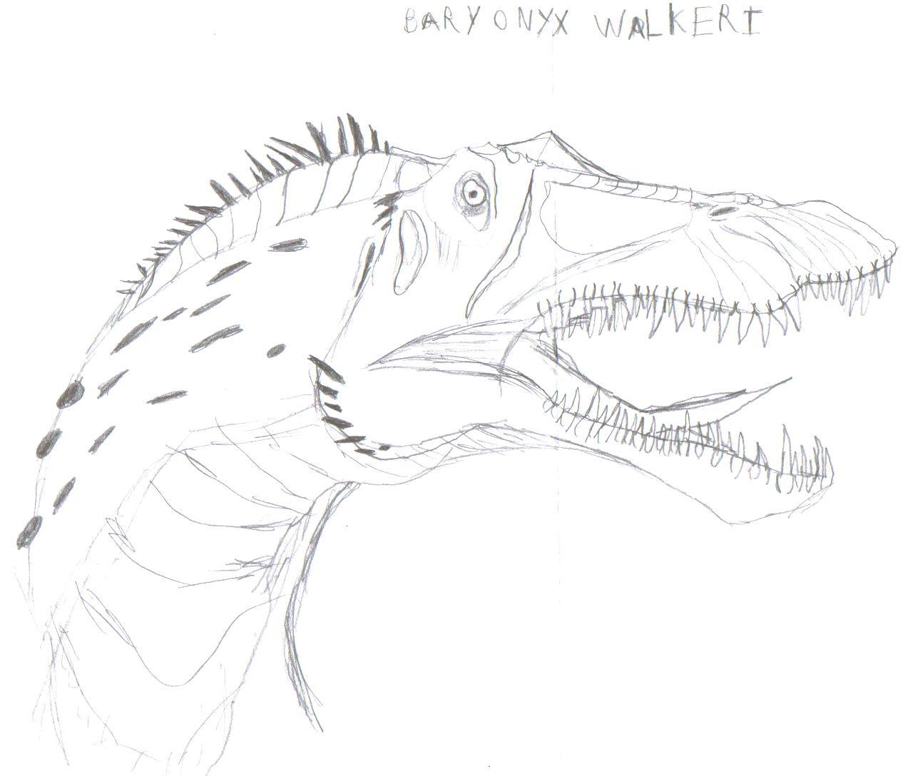 Bary Onyx Walkeri by RaptorMaster