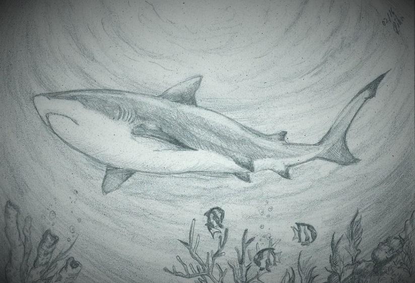 Reef Shark by Rike