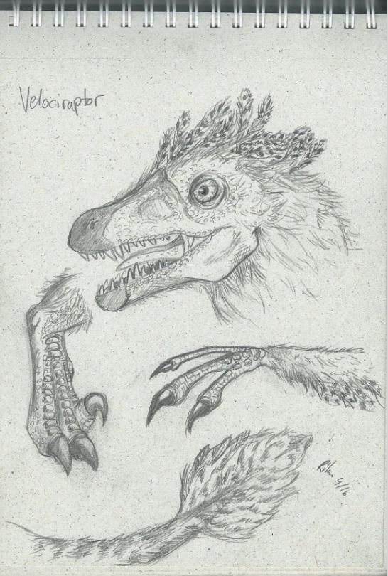 Velociraptor by Rike
