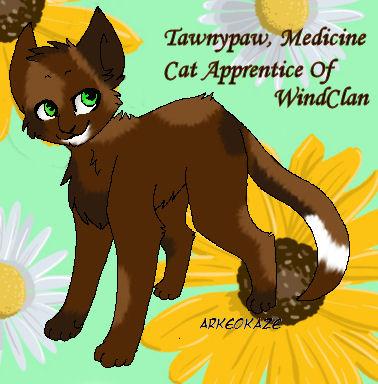 Tawnypaw, Medicine Cat Apprentice of WindClan by RoxxanneOfNarnia1234