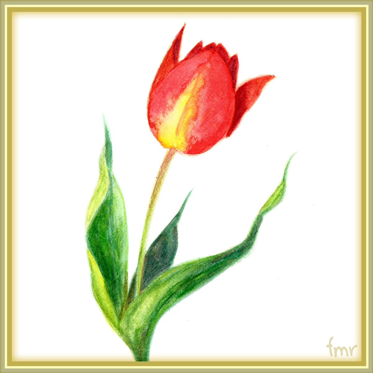 Red Tulip - gift for Falconlobo by Saltwater